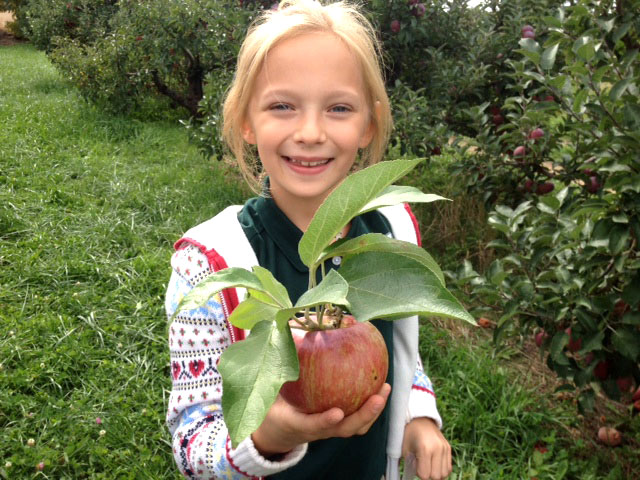 2nd Grade Apple Picking