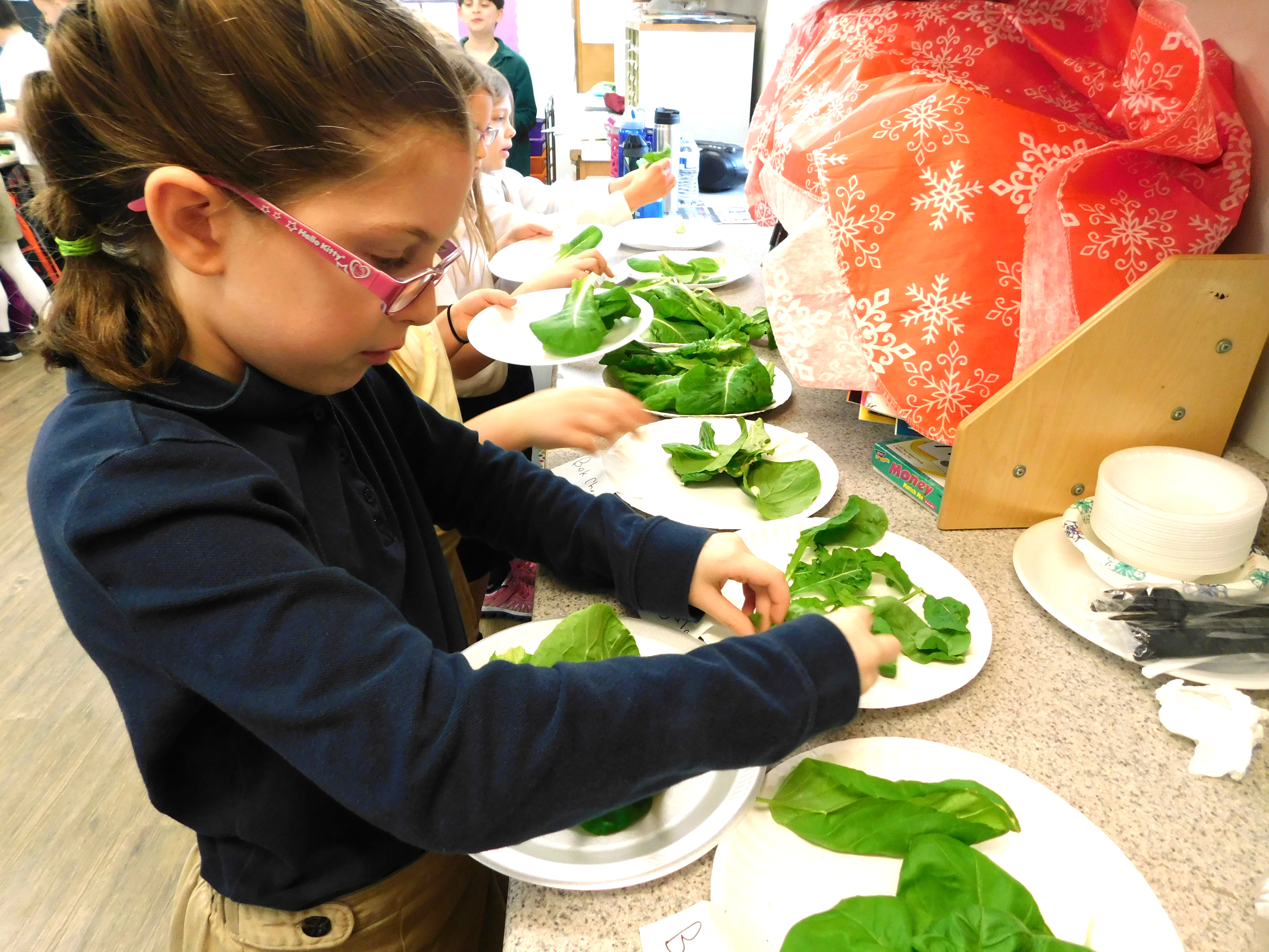 Second grade harvesting lettuce they grew in the classroom